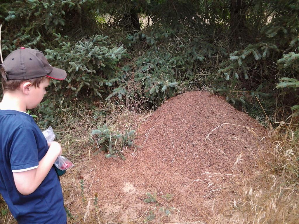 Martin og Farfar finder kæmpe myretue på morgentur