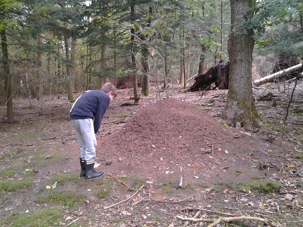 Martin og farfar på morgentur og finder en kæmpe myretue